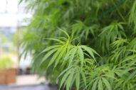 Leafwire on SeedInvest